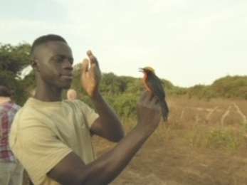 Dembo from the Kartong Bird Observatory