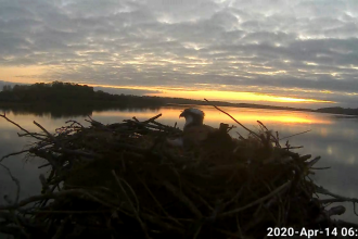 Dawn photo of the Manton Bay nest