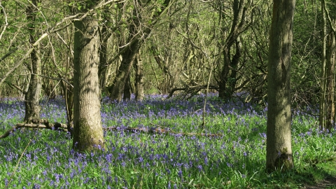 Priors Coppice (c) LRWT