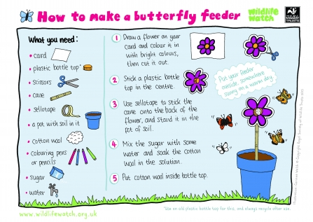 wildlife watch make a butterfly feeder instruction sheet