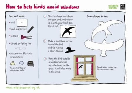Help birds avoid windows Wildlife Watch
