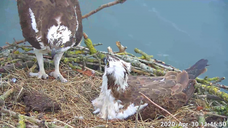 Maya and 33 on the nest