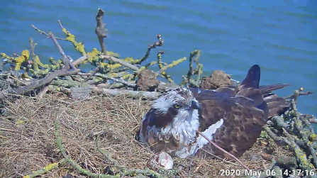 Maya on the Manton Bay nest